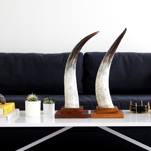 Cow Horn Decorative Object