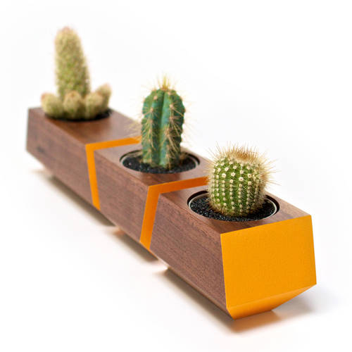 Boxcar Set Walnut & Orange - Succulent Planter Set with a Clear Finish